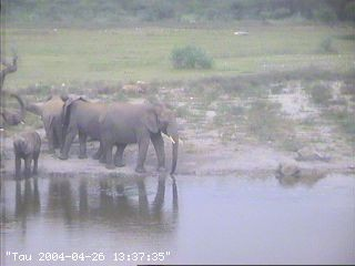African Wildlife Dyreliv I Afrika