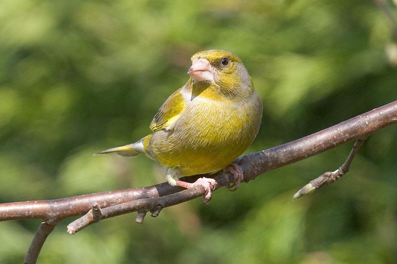 Grønn fugl på fuglebrettet