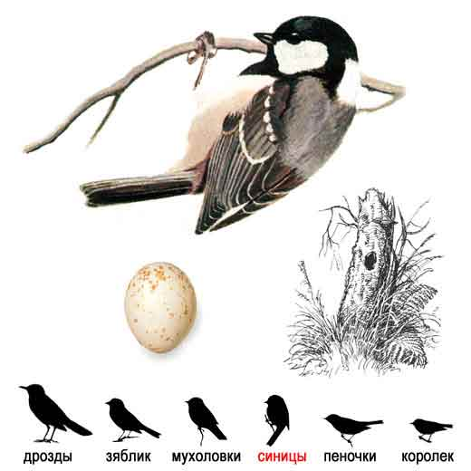 no dyr bird store pupper parus store