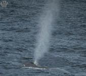 Scotia Sea, Fauna and Nature, Part 5: The Great Marine Mammals
